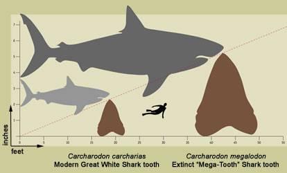 Sharktooth Jaws
